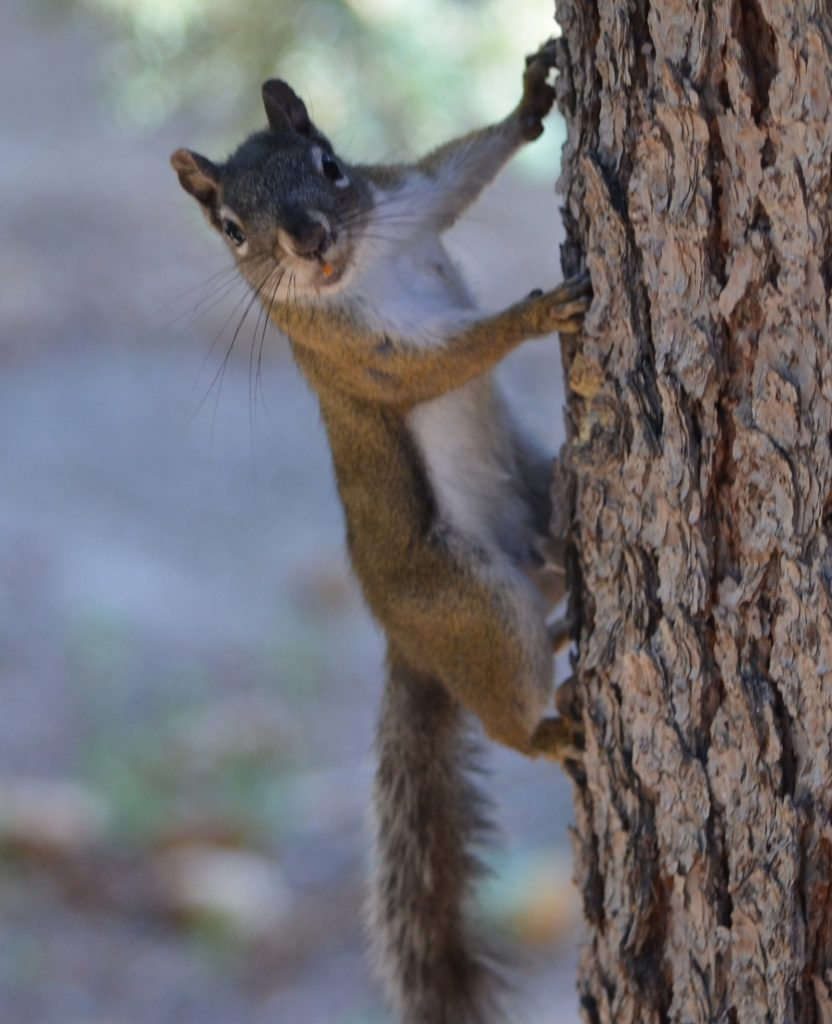 I swear this squirrel is sticking its tongue at me.